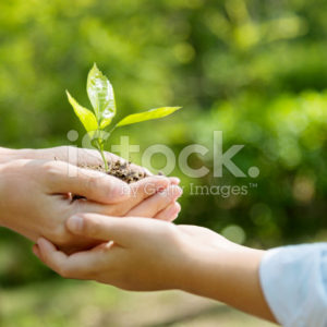 stock-photo-82040651-mother-and-son-hands-holding-new-plant
